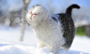 Зима, снег и животные!