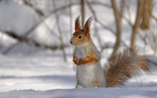Звери в зимнем лесу